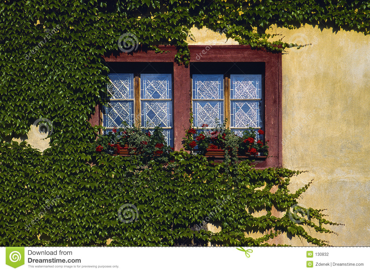 Boston Ivy 1 Stock Photography - Image: 130832