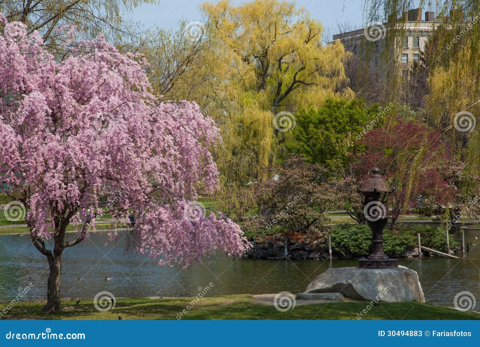 Blue Skies Of Texas >> Boston Spring Stock Photos - Image: 30494883