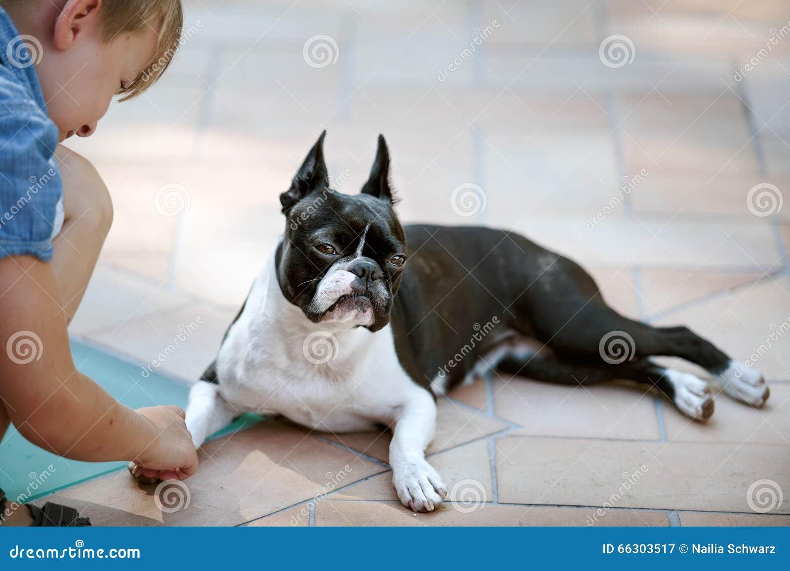 Boston Terrier en Jongen