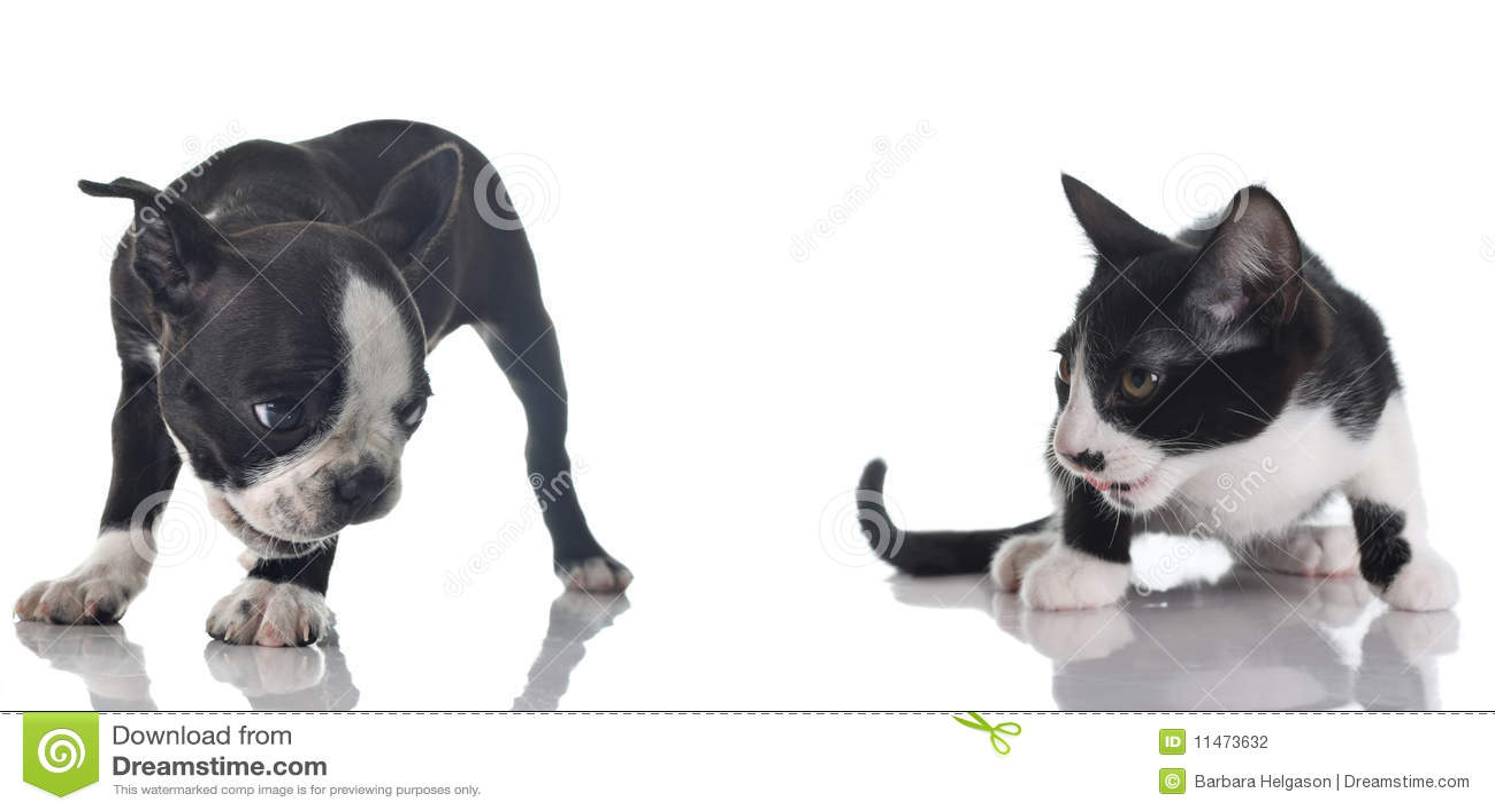animal shelter el paso