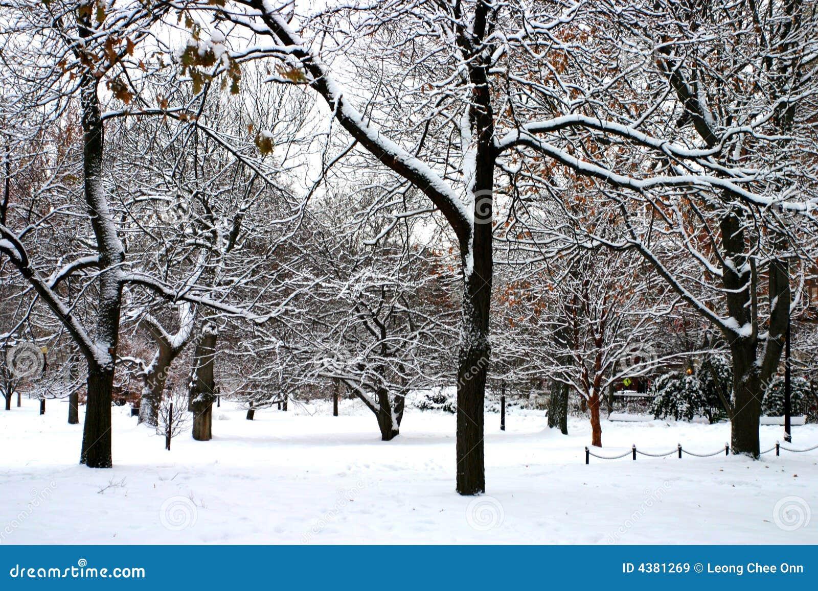Stock image of a snowing winter at boston massachusetts usa