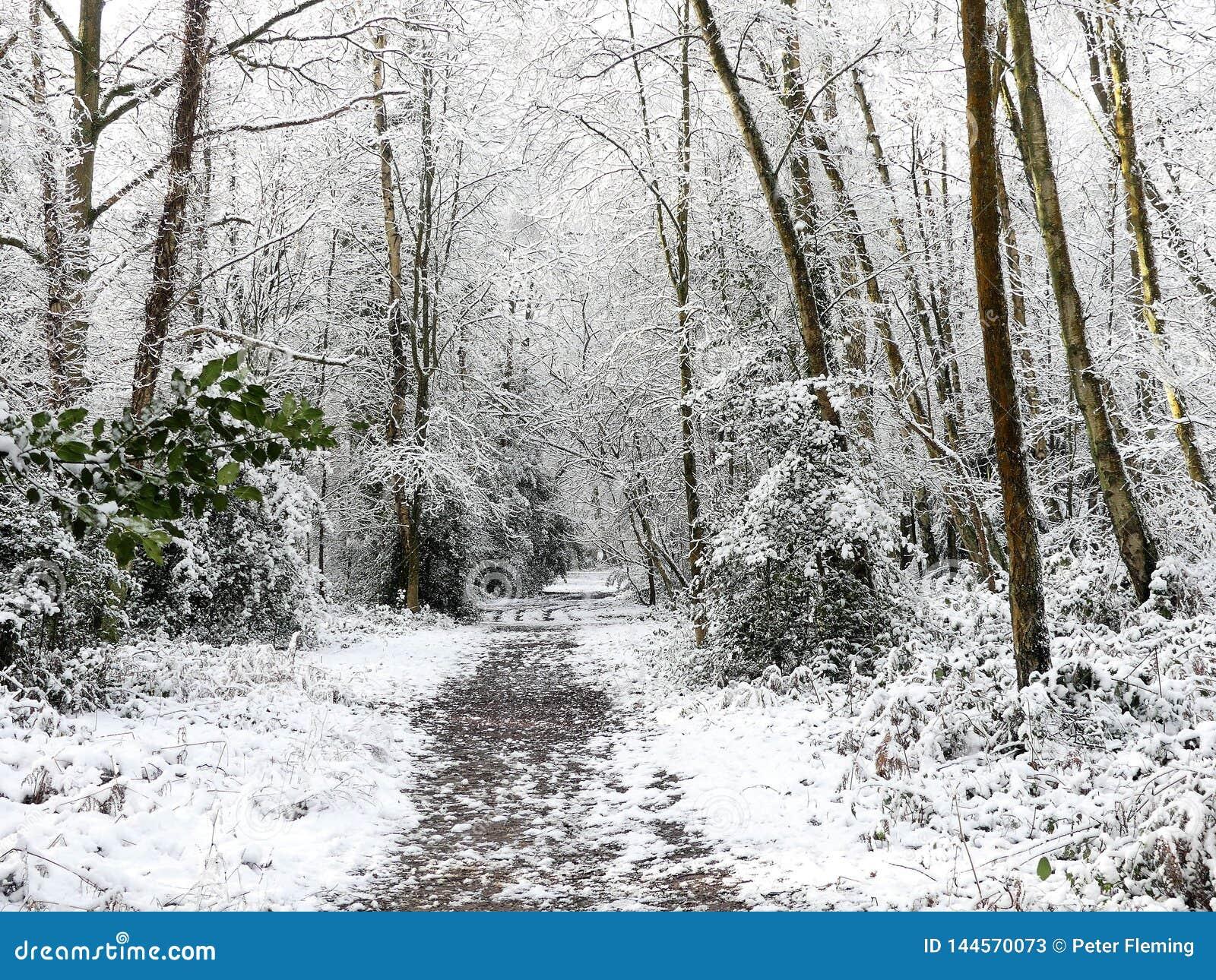 Bosvoetpad in de wintersneeuw, Gemeenschappelijke Chorleywood, Hertfordshire