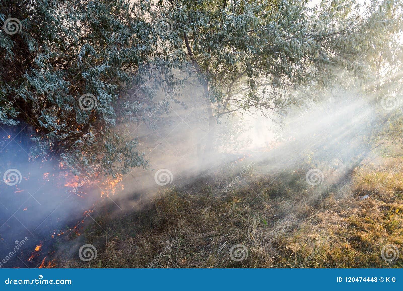 Boswildfire toe te schrijven aan droog winderig weer Zonnestralen het lichte gaan door zware rook 3D geef terug