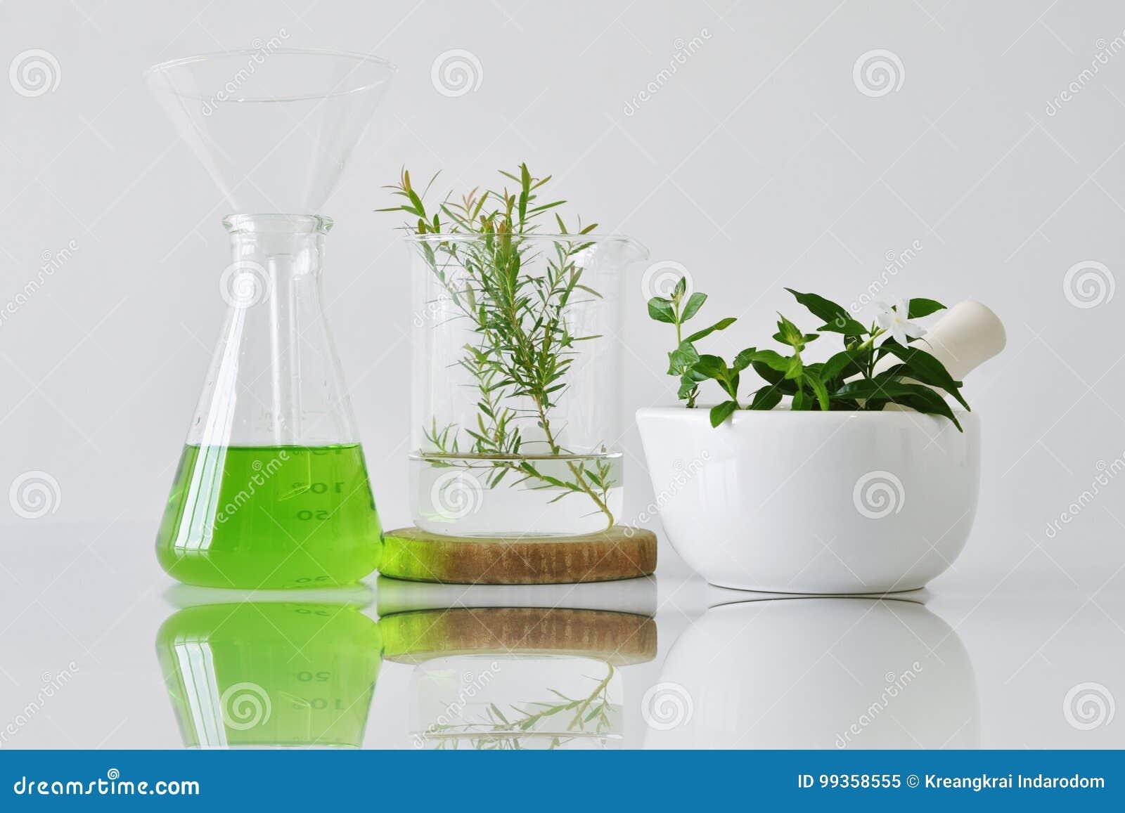 Botânica orgânica natural e produtos vidreiros científicos, medicina alternativa da erva, produtos de beleza cosméticos dos cuida