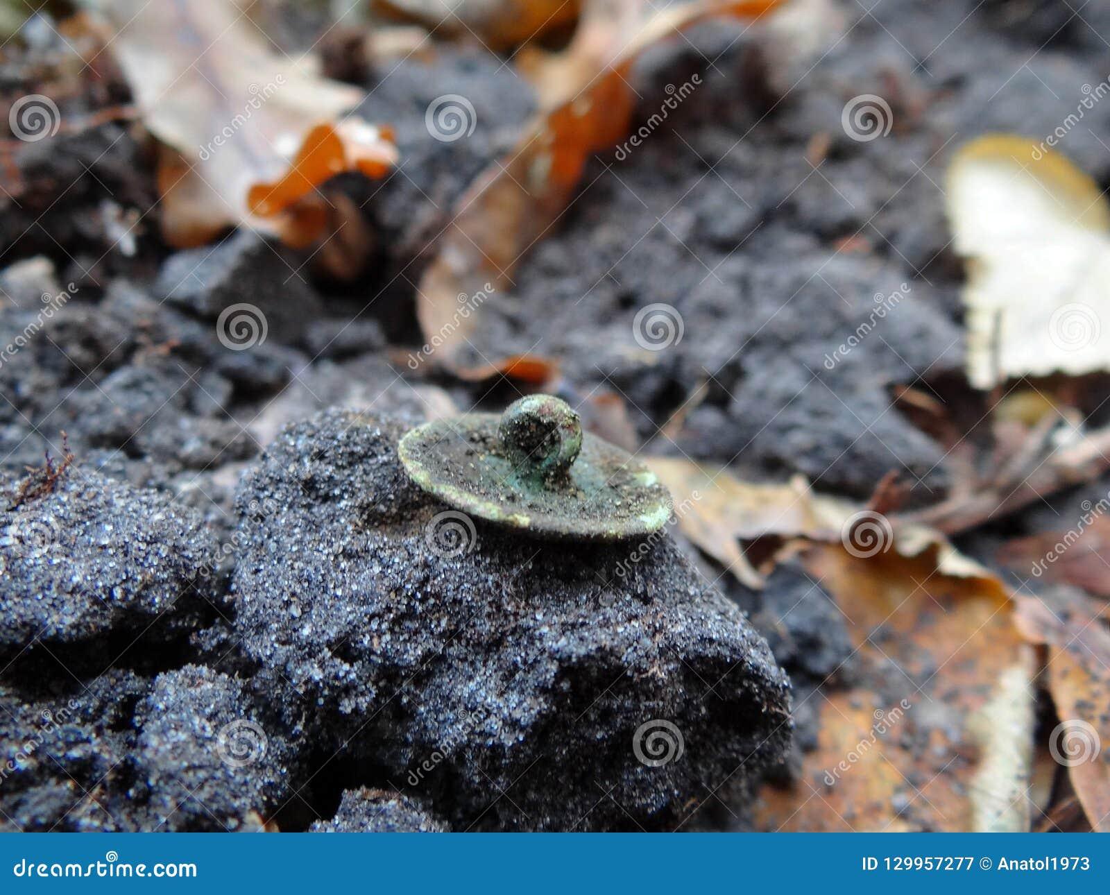 Botão de bronze verde sujo velho na terra cinzenta