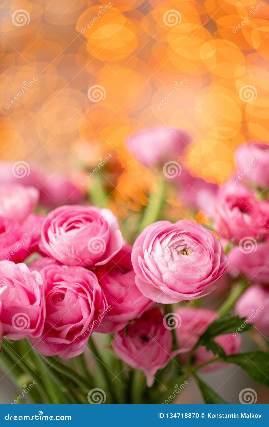 Botão de ouro persa Flores cor-de-rosa carmesins do ranúnculo do grupo no vaso de vidro Bokeh da festão no fundo Papel de parede