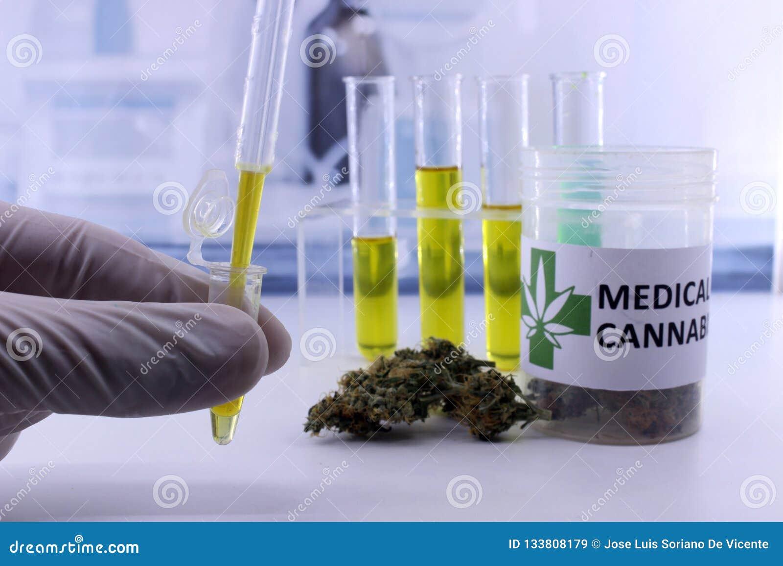 Botões de teste da marijuana para a extração do óleo do cannabis