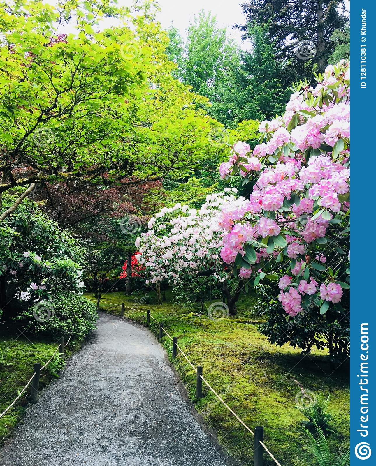 Botanic Garden Stock Image Image Of Background Path 128110381