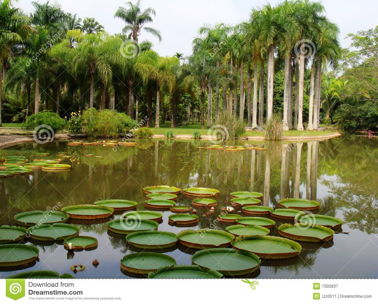 Botanical Garden Royalty Free Stock Photography Image 7305837