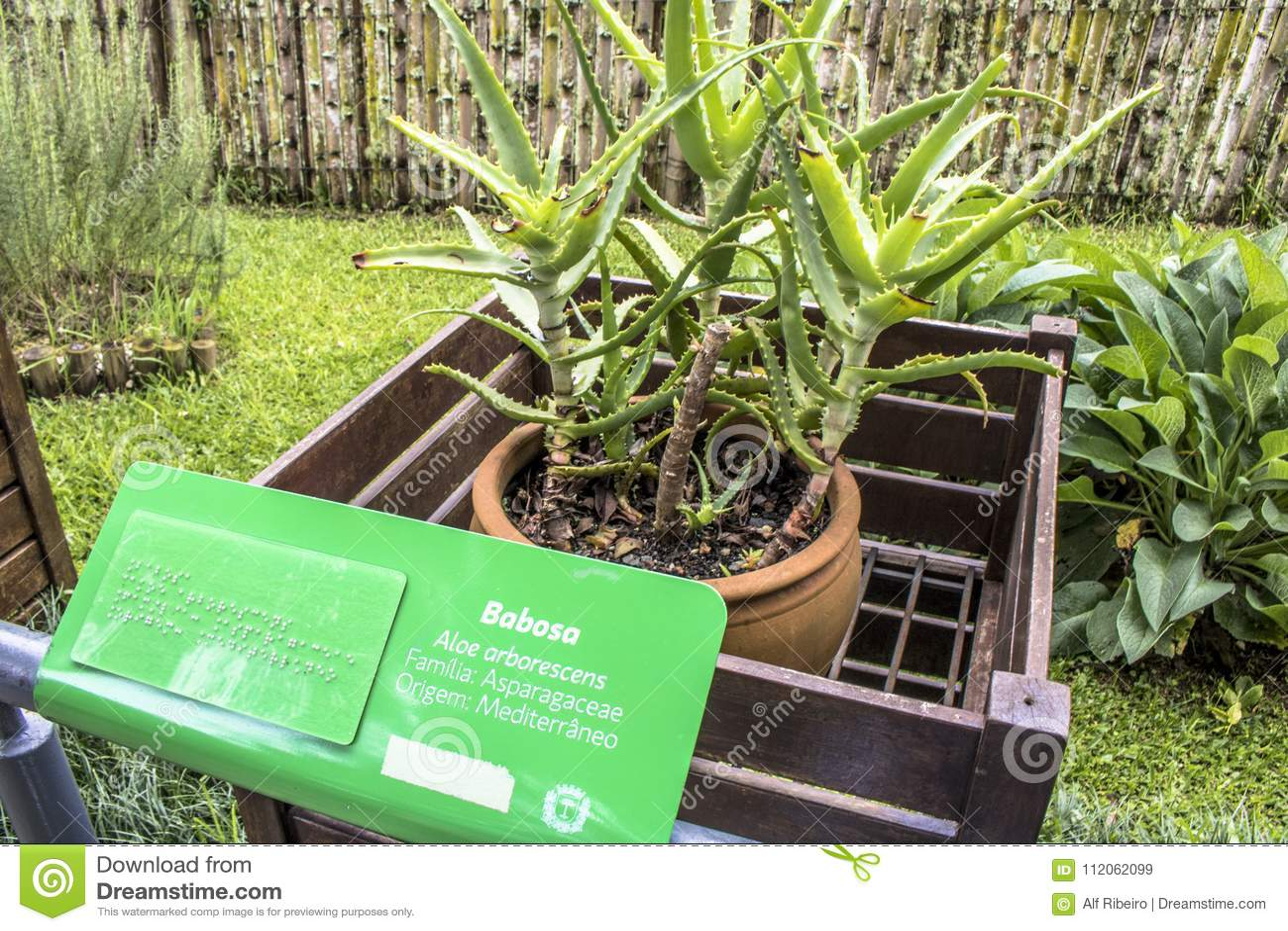 botanical garden editorial stock image. image of feelings - 112062099