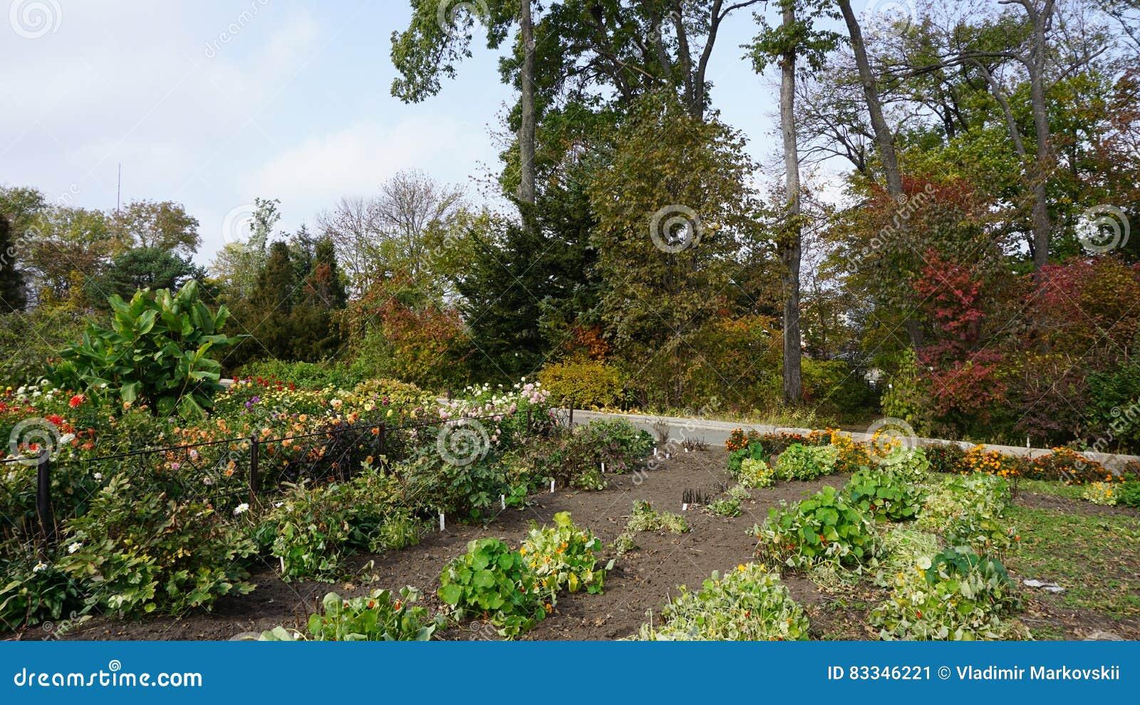 Botanical Garden. Vladivostok. Russia. Editorial Photo - Image of ...