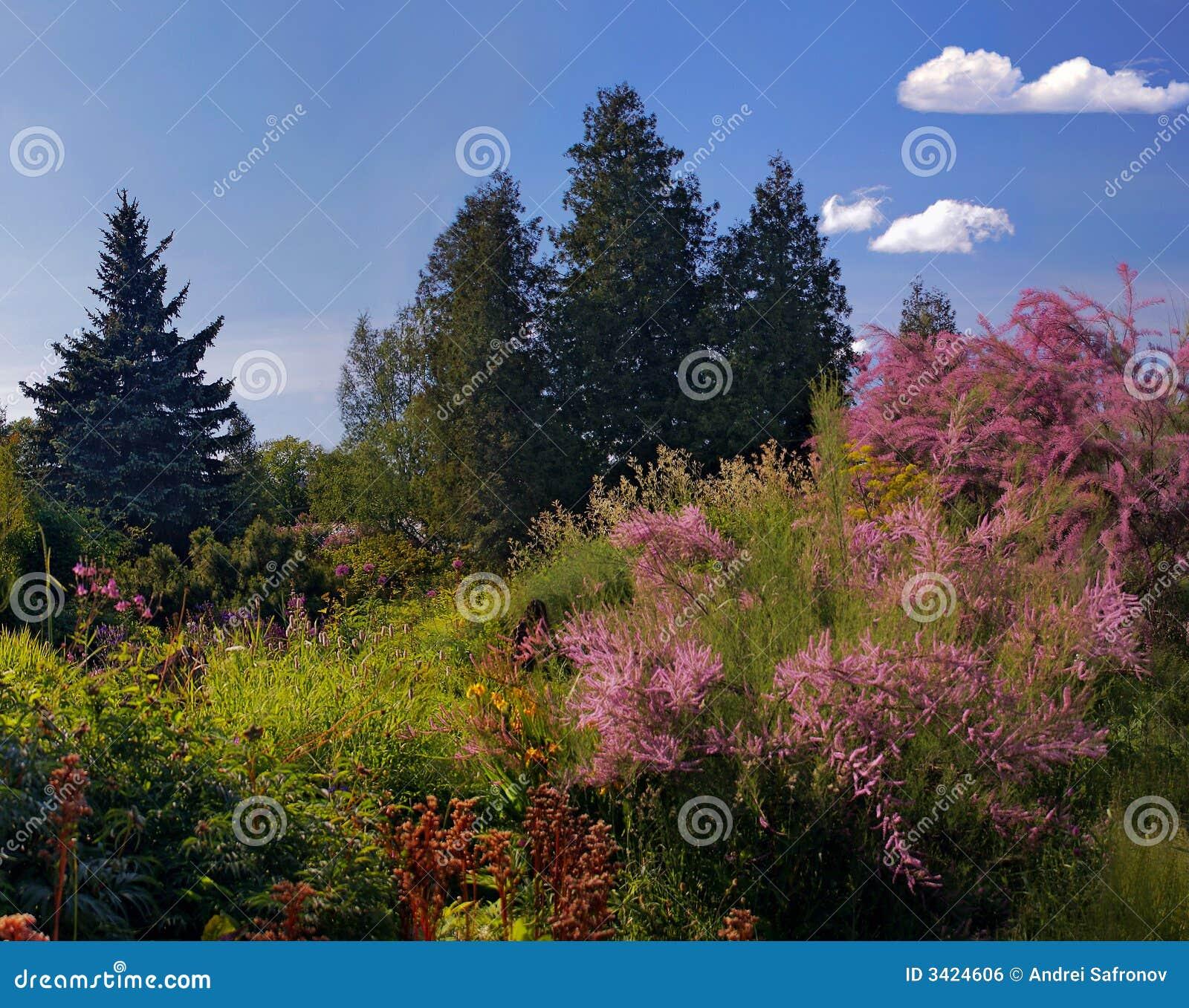 Botanical Gardens Royalty Free Stock Image Image 3424606