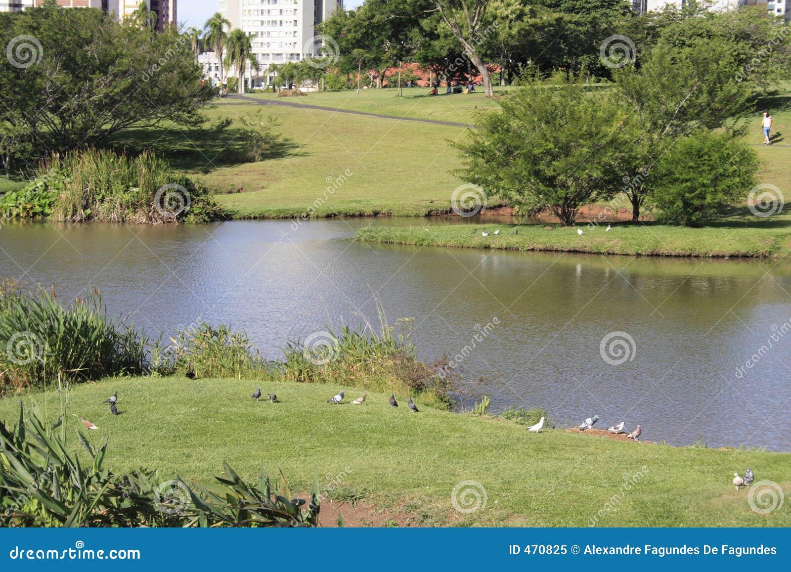 Download Botanical Gardens Curitiba Brazil Stock Image - Image of brasil, lake: 470825