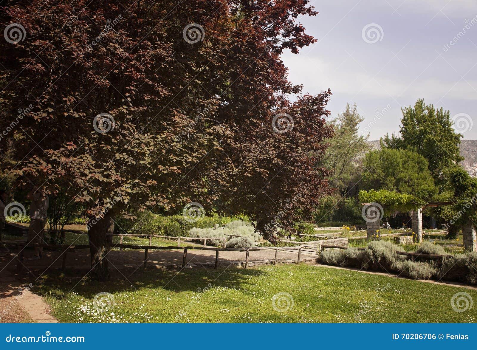 Botanical gardens stock photo. Image of beauty, bridge - 70206706