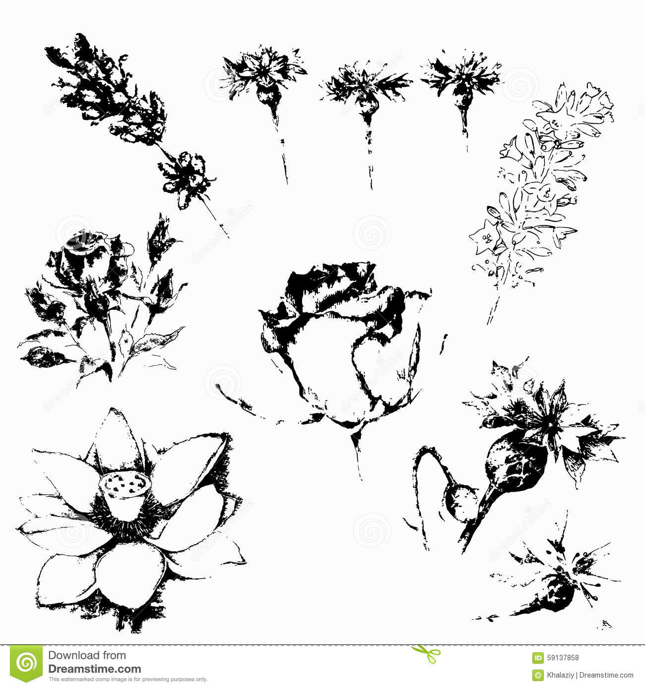 Botanical illustration black and white - photo#15