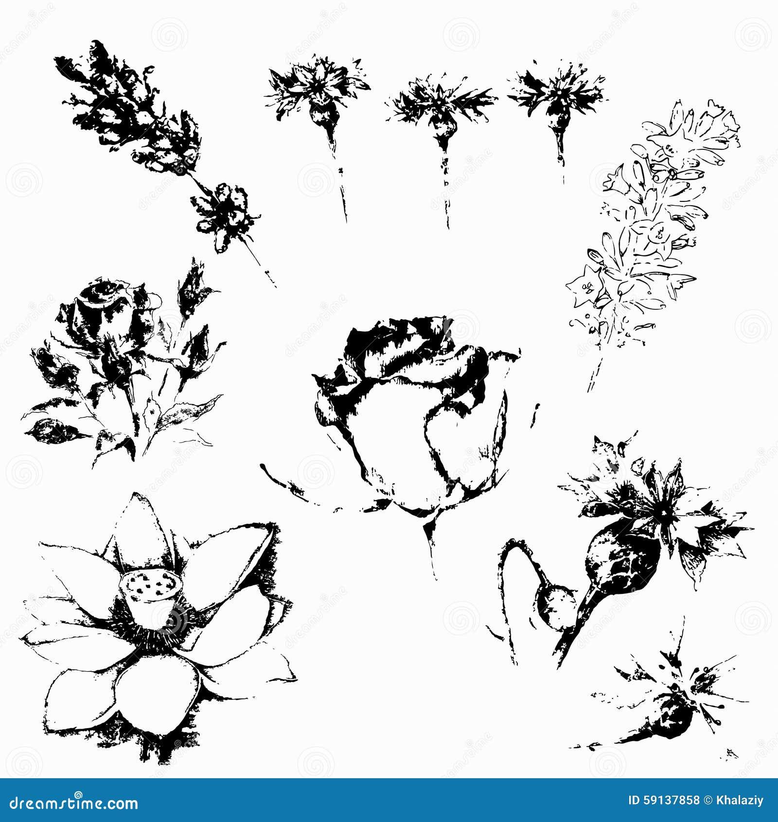 Botanical Illustration Of Flowers In Black And White Stock Vector