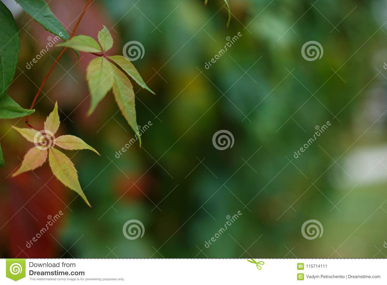 Botanical, nature, gardening background. Autumn leaves picture w