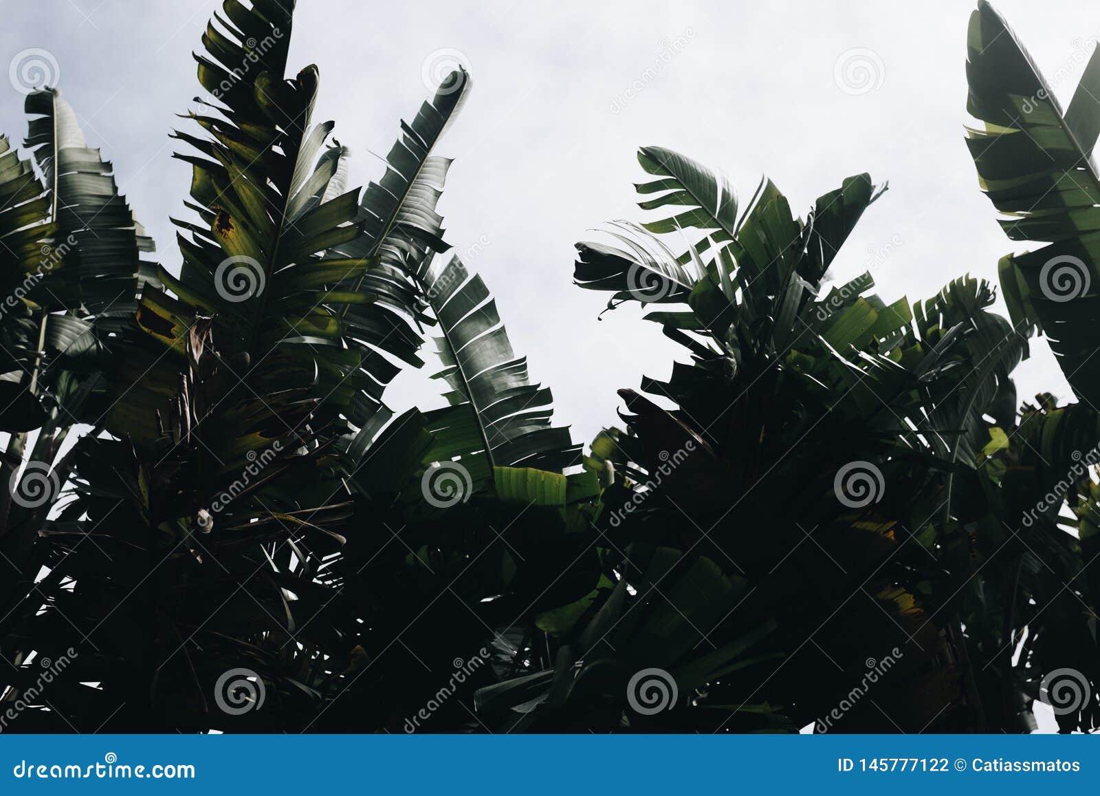 Botanical urban