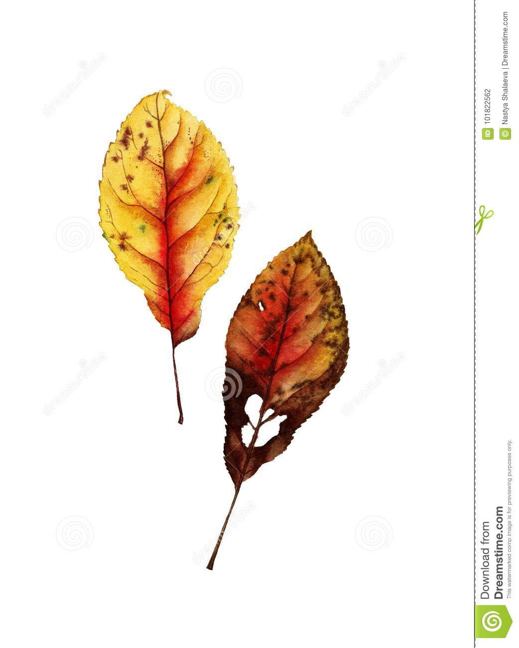 Botanical watercolor of autumn leaf