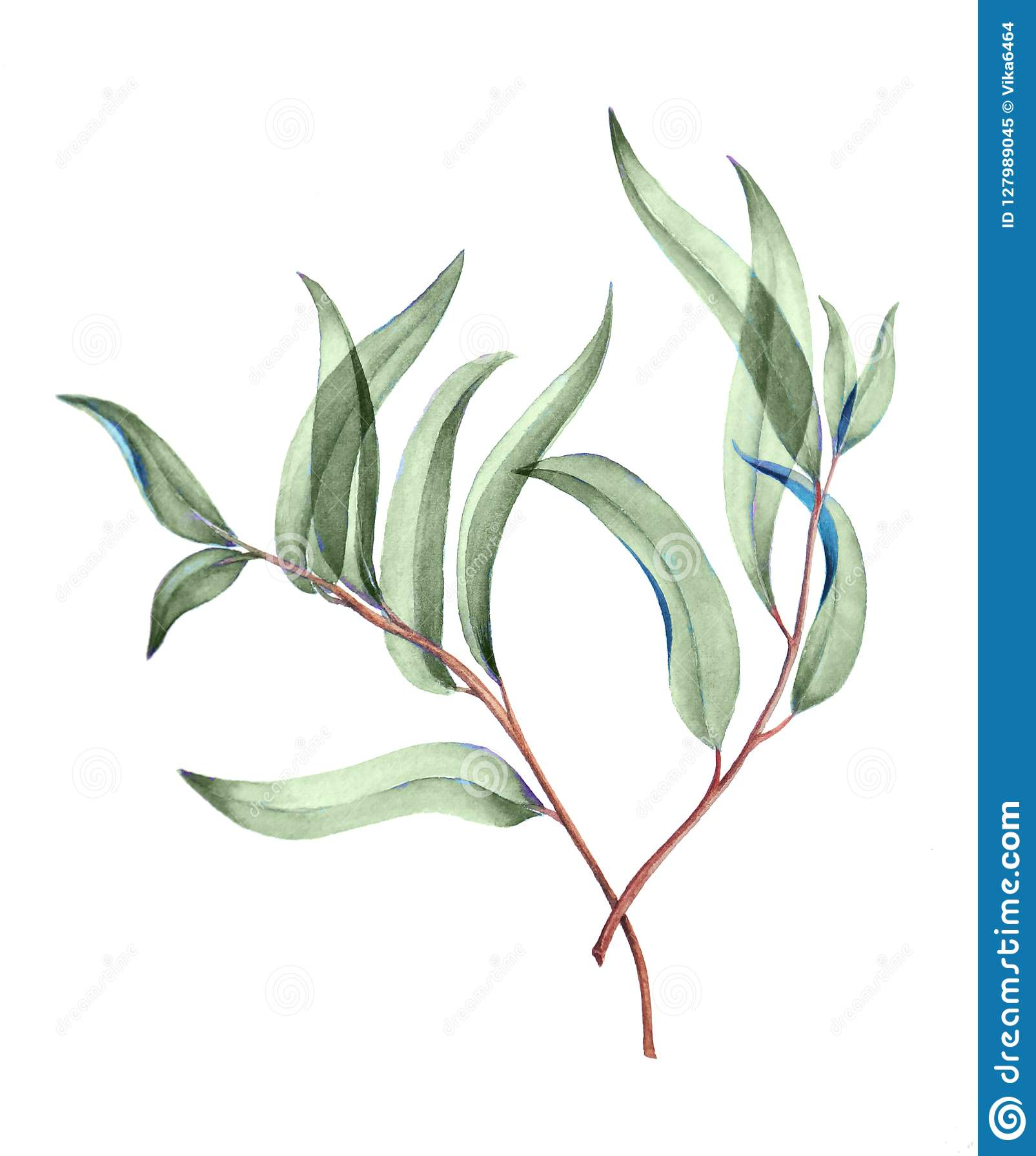 Botaniczna akwareli ilustracja delikatni zieleni liście