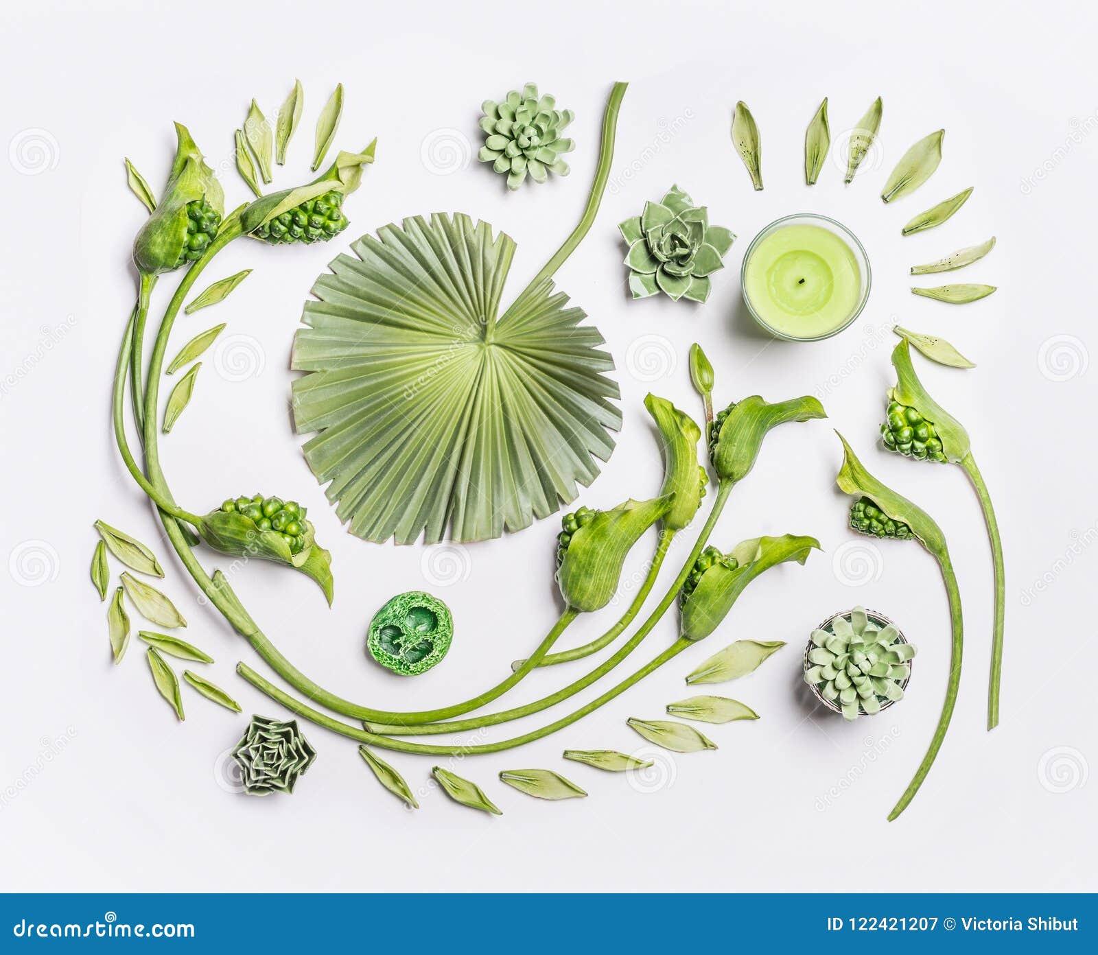 Botaniczny mieszkanie kłaść z tropikalnymi liśćmi, sukulent roślinami, zieleń kwiatami i świeczkami na białym tle, odgórny widok