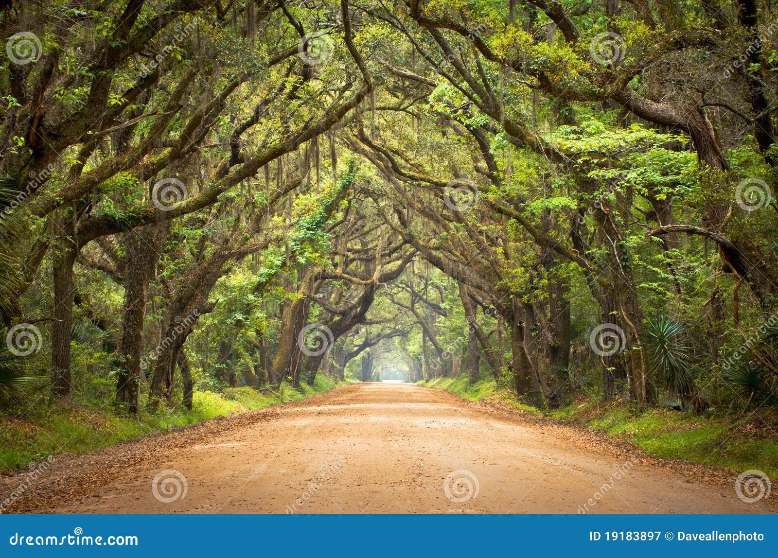 Botanik-Schacht-gespenstischer Schotterweg-gruselige Eichen-Bäume