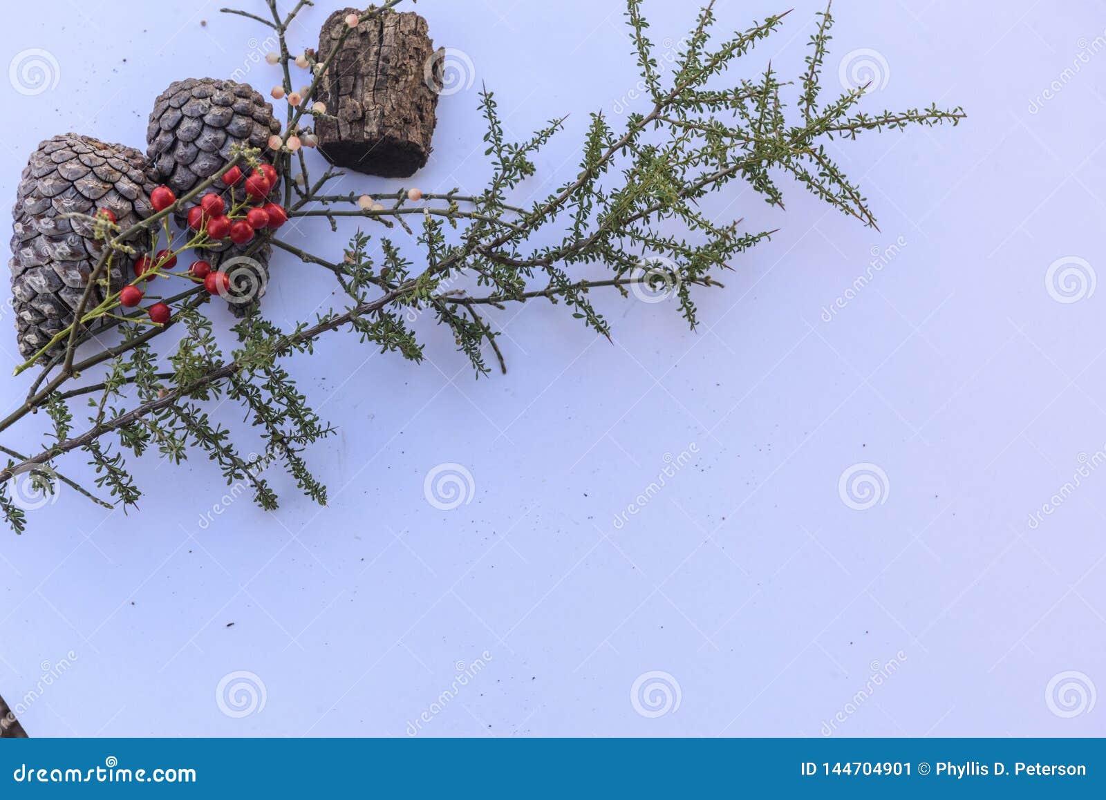 Botanisch stilleven met pinecones met bessen