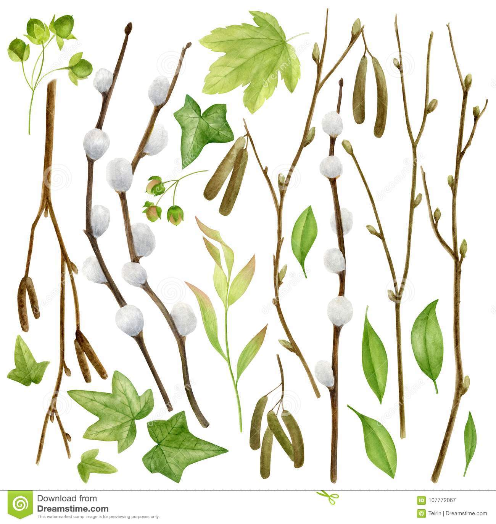 Botanische Sammlung Des Aquarells Kräuter, Wilde Blumen Und Blätter ...