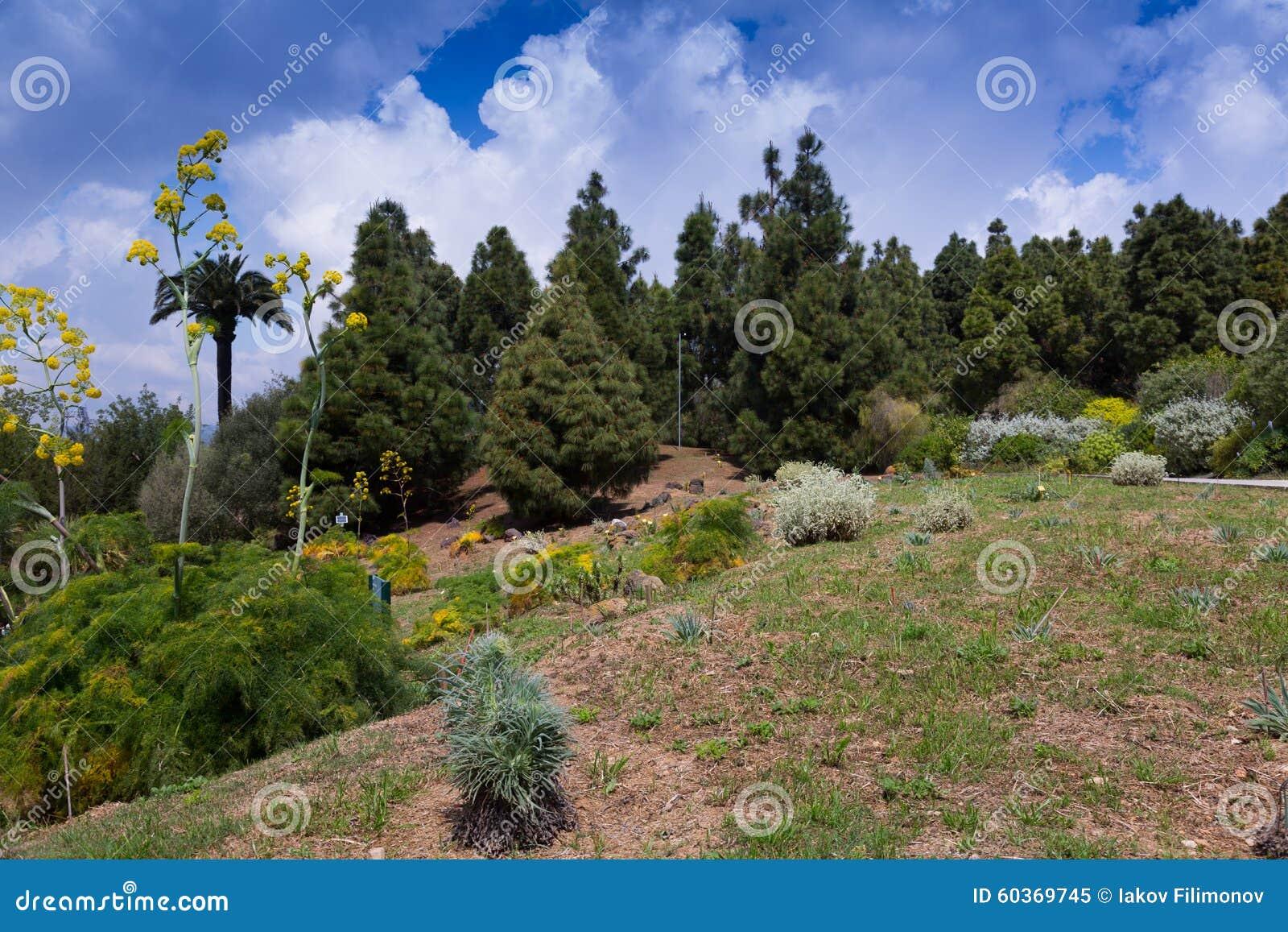 Botanischer Garten Von Barcelona Stockbild Bild Von Gärten Garten