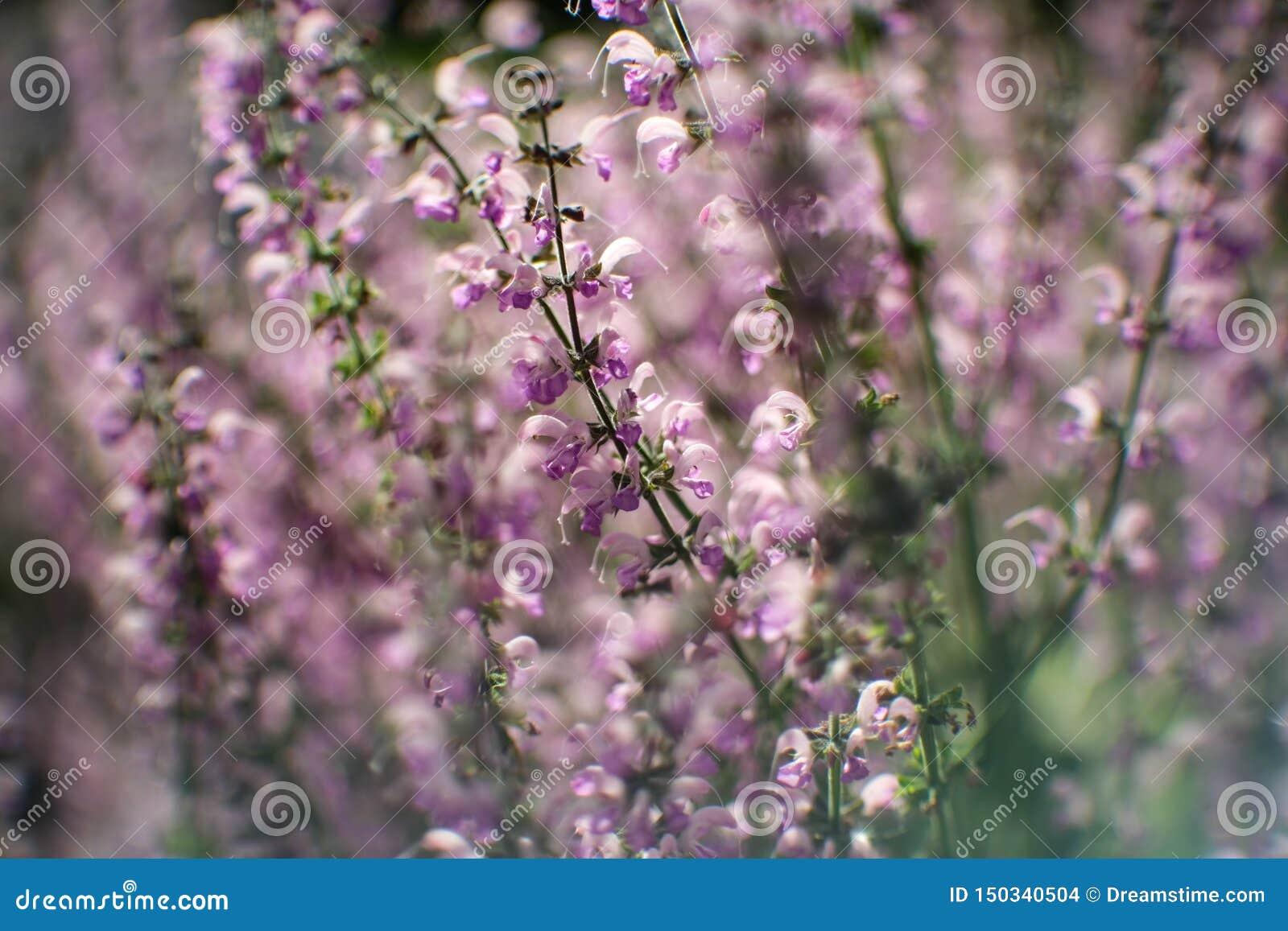 Botanisk trädgård plan, bakgrund som är härlig, blom, färg, fält, flora, blomma, natur, vår, sommar, sommar,
