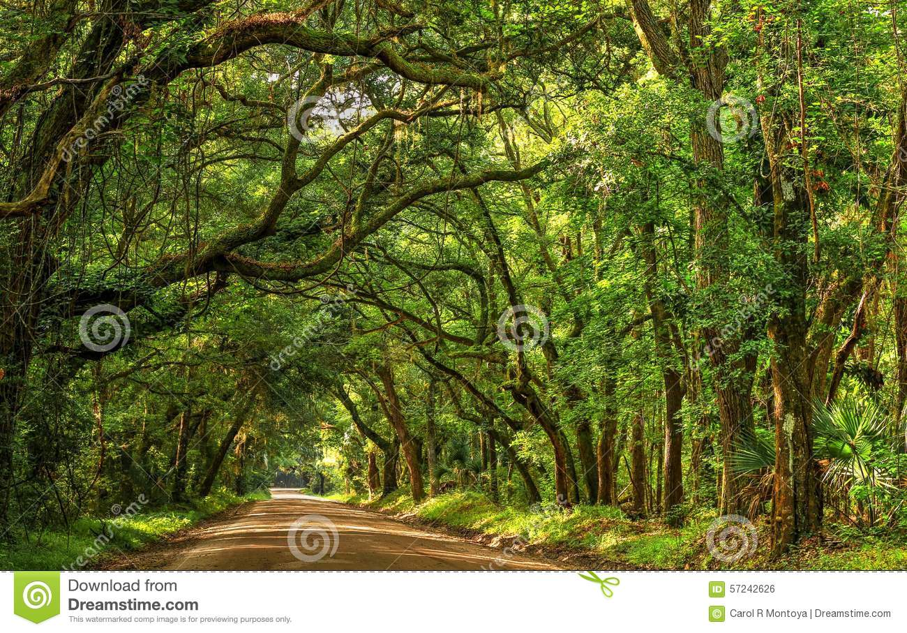 Beautiful tree lined dirt road leads to the entrance of Botany Bay  Plantation on Edisto Island south of Charleston, SC.
