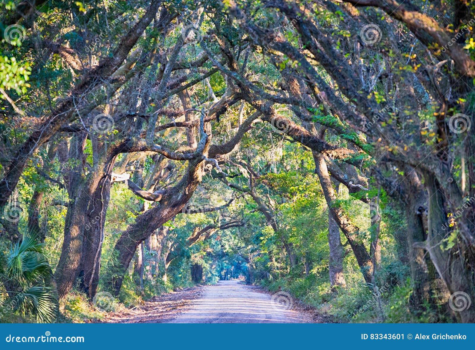 botany bay plantation spooky dirt road marsh oak trees