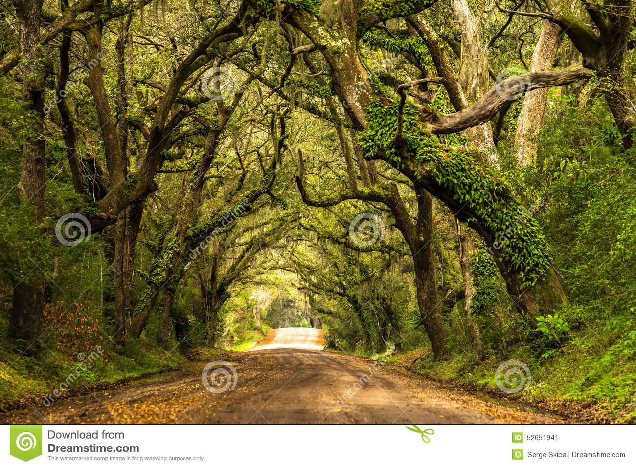 A live oak lined dirt road leading to Botany Bay Plantation located on  Edisto Island, South Carolina