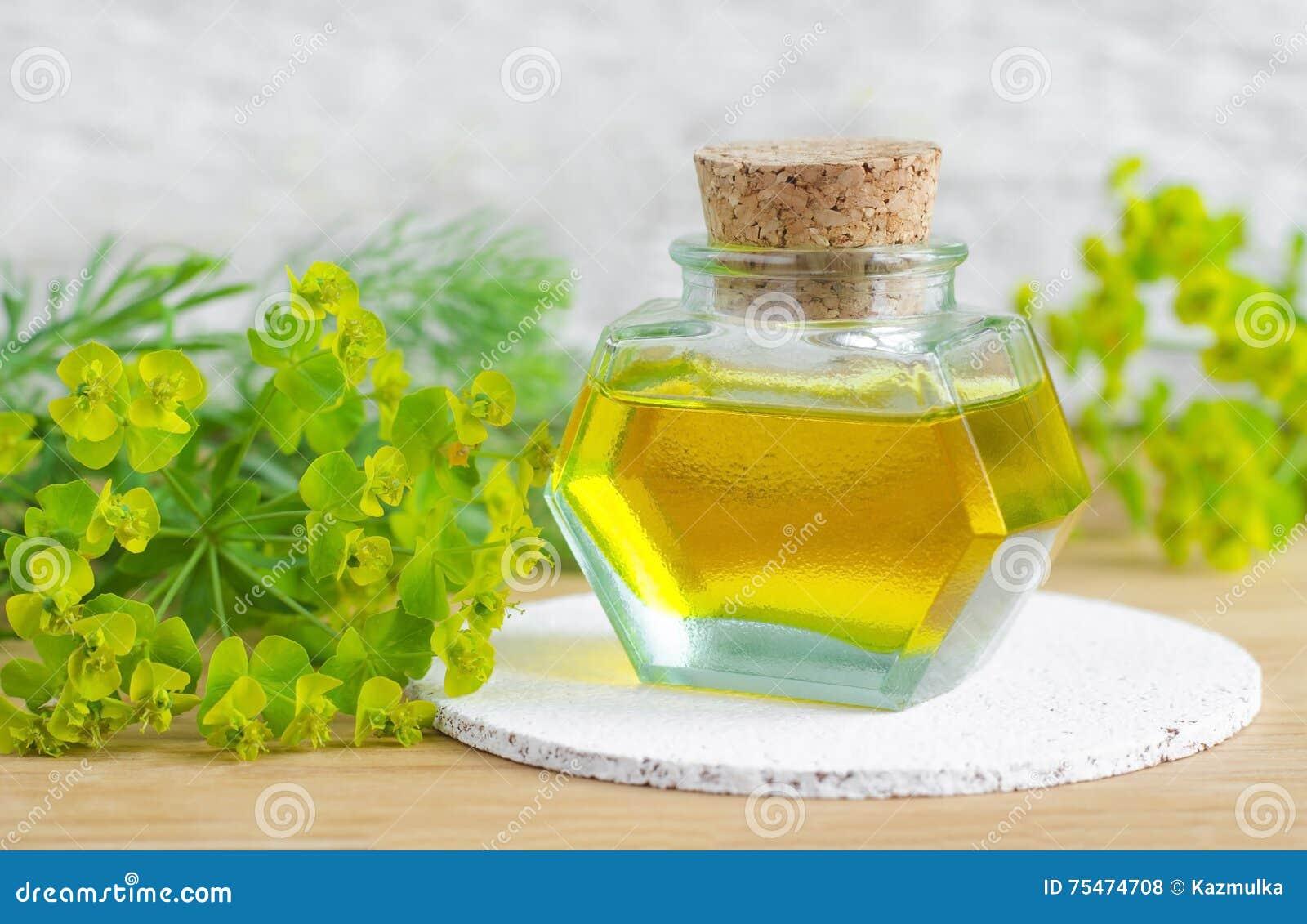 Botella de cyparissias del euforbio, extracto del spurge del ciprés (tinte del Milkweed, infusión, aceite herbarios)
