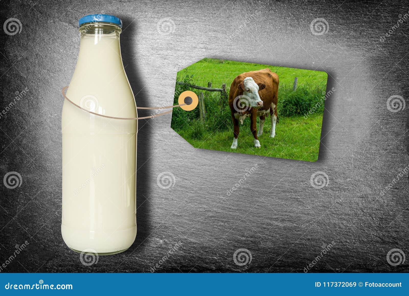 Botella de leche con la etiqueta - vaca lechera en prado - aislada en pizarra