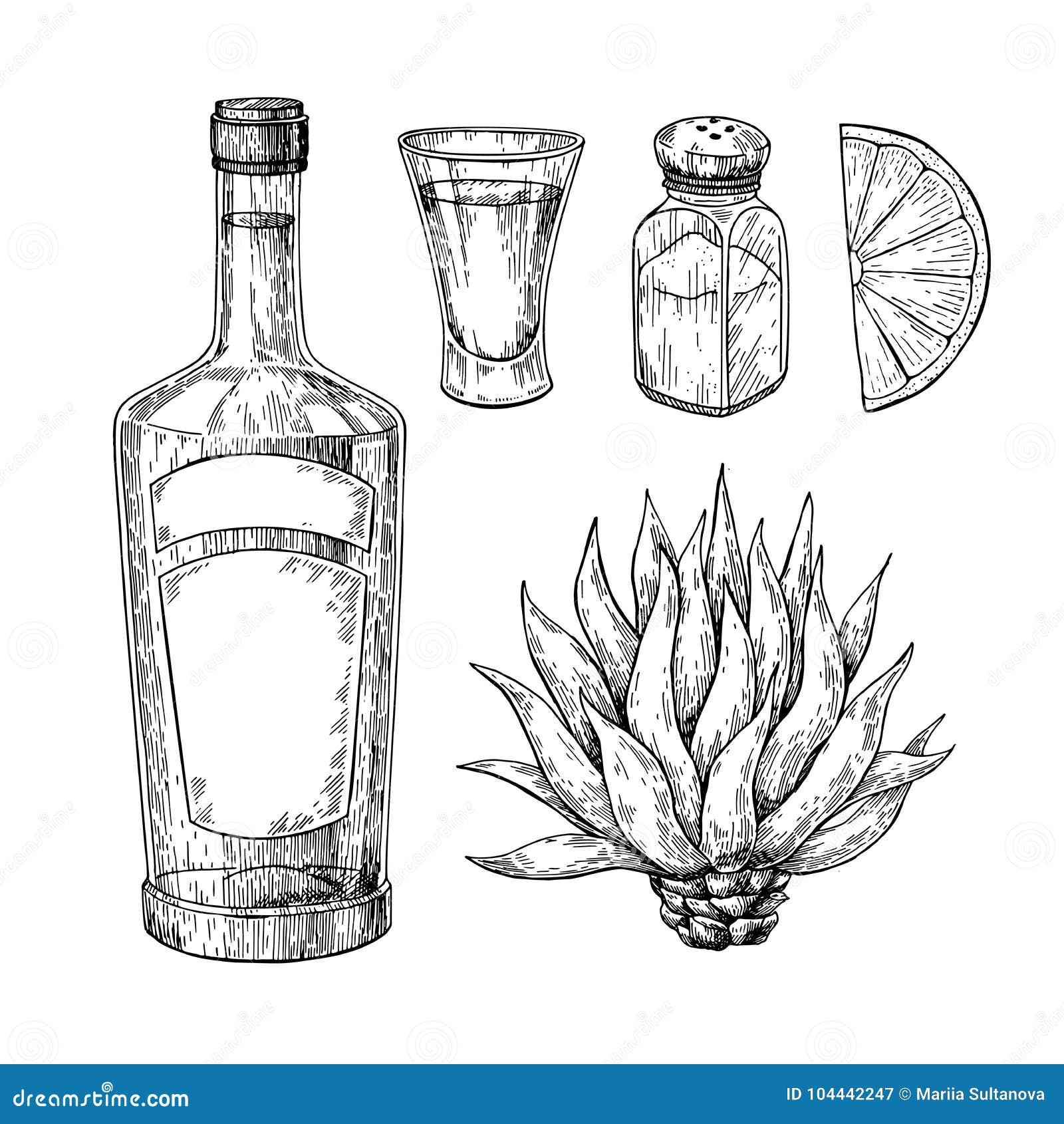Botella del Tequila, agavo azul, coctelera de sal y vaso de medida con la cal Dibujo mexicano del vector de la bebida del alcohol
