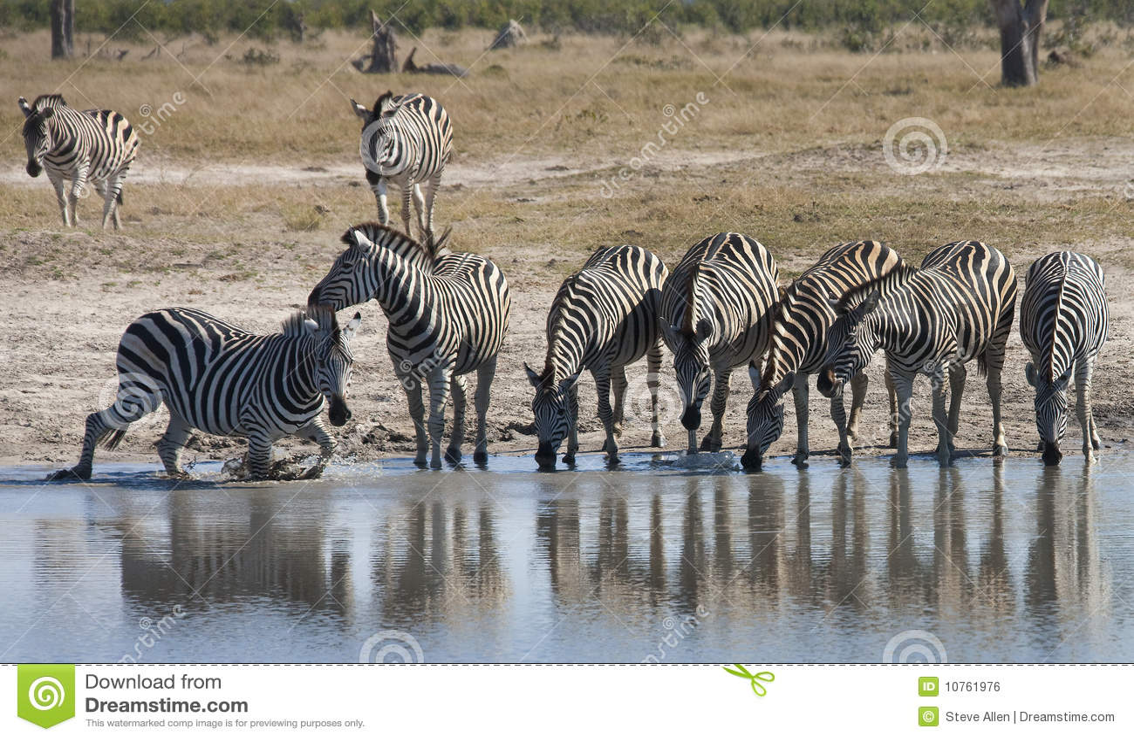 Botswana waterholesebra