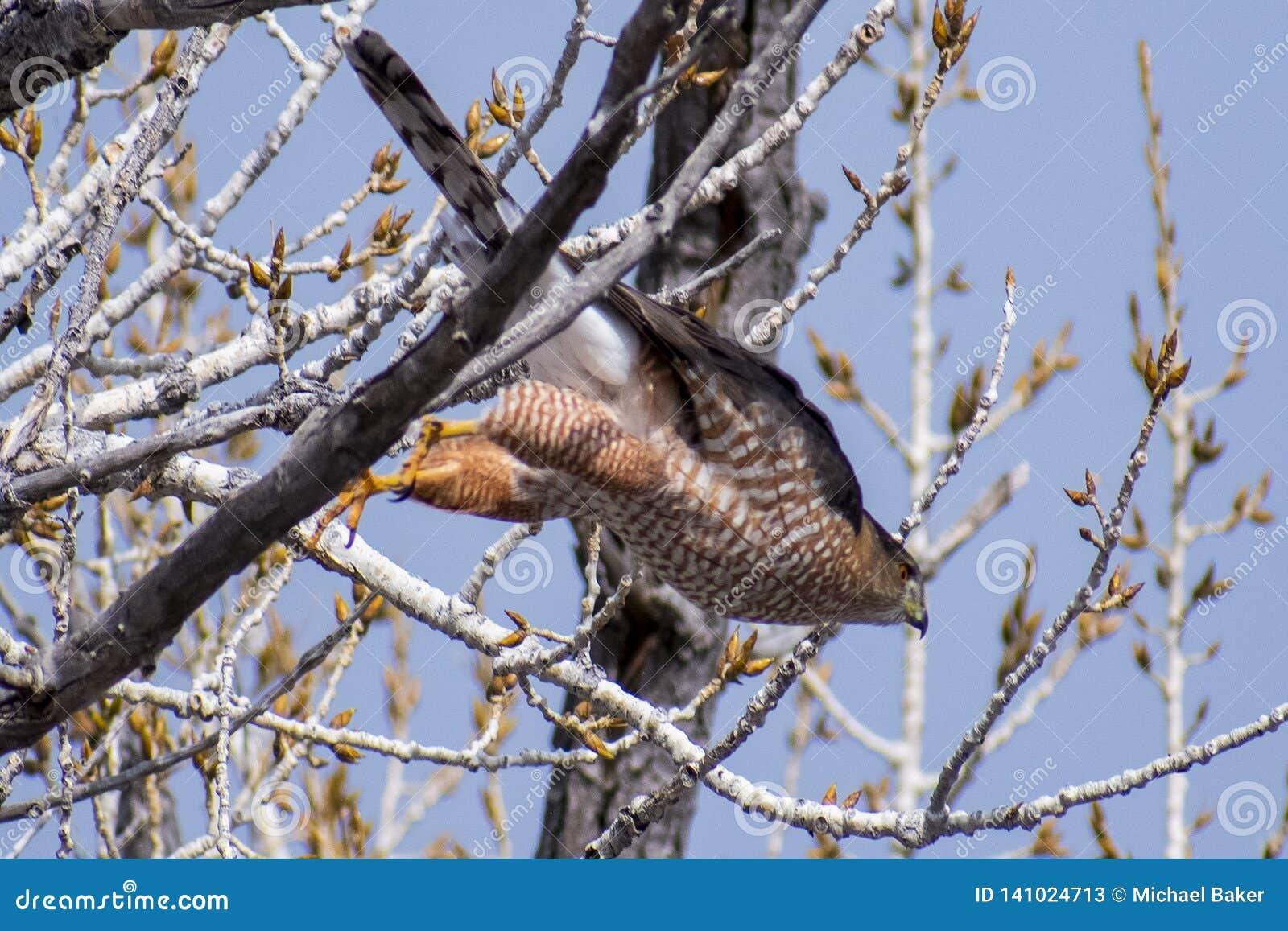 Bottai Hawk About per prendere volo