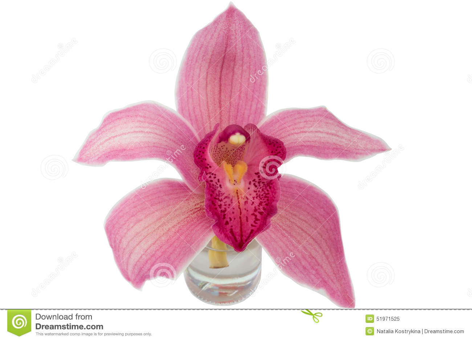 Bottiglia di vetro dell orchidea isolata su fondo bianco