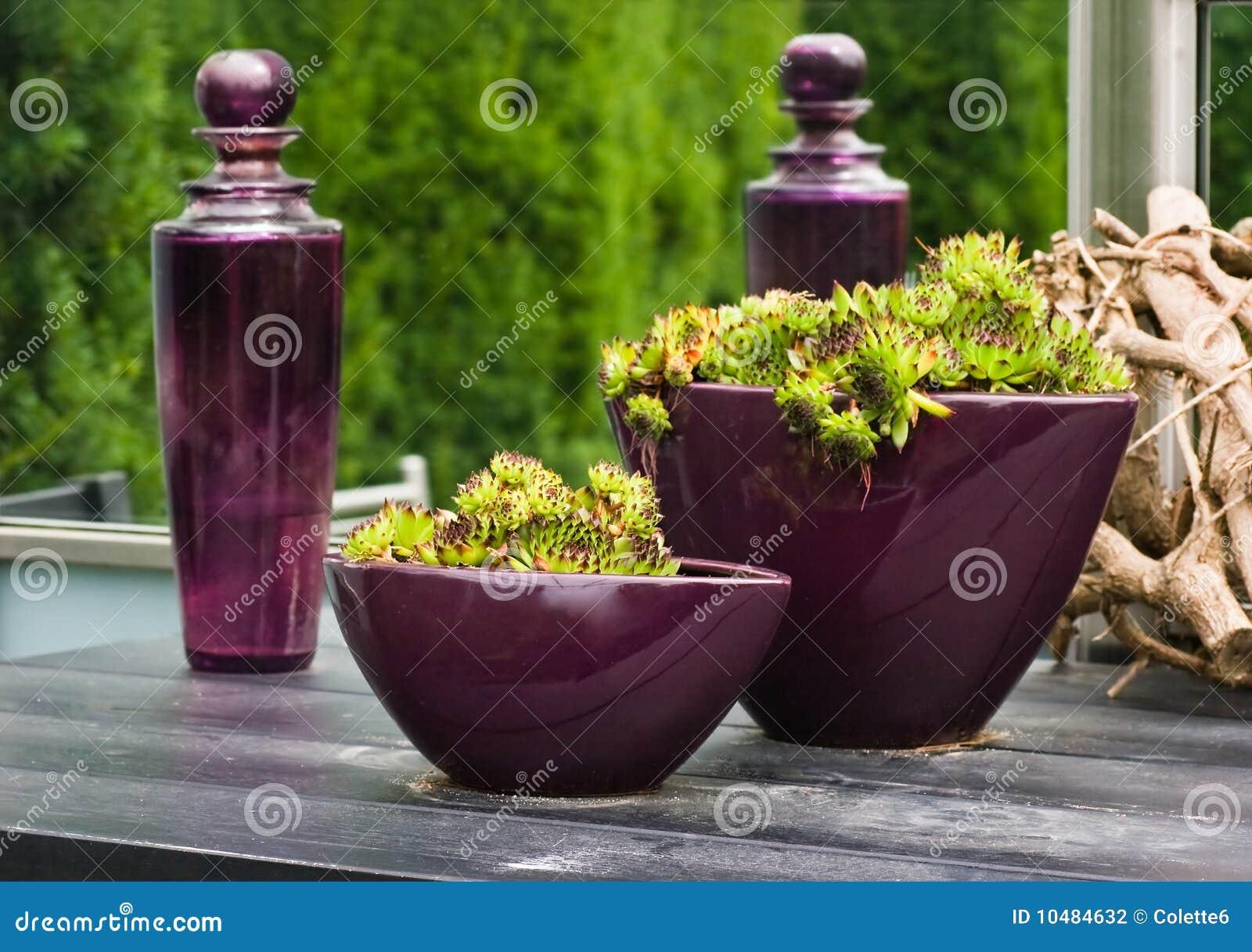 Bottiglie di vetro e vasi viola con le piante fotografia for Vasi ermetici vetro