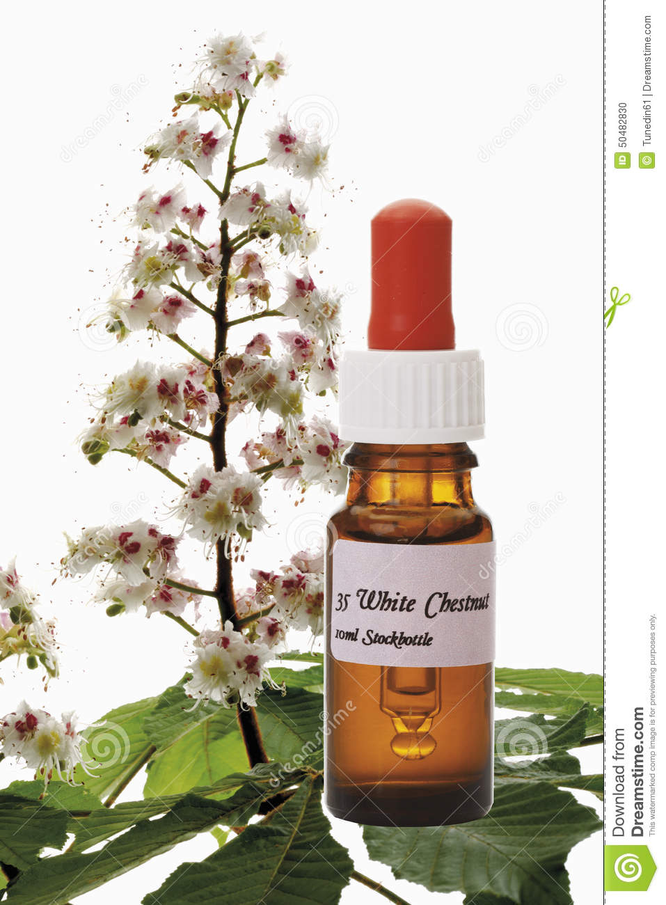 Bottle With Bach Flower Stock Remedy White Chestnut Aesculus