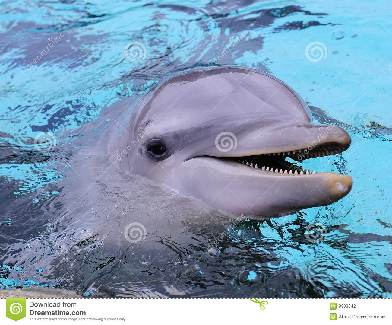 the bottle nosed dolphin essay Get up close with the highly intelligent common bottlenose dolphin.