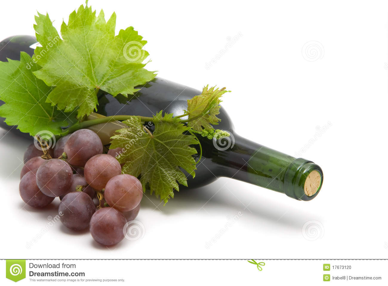 Bottle of wine with grape leafs and vine