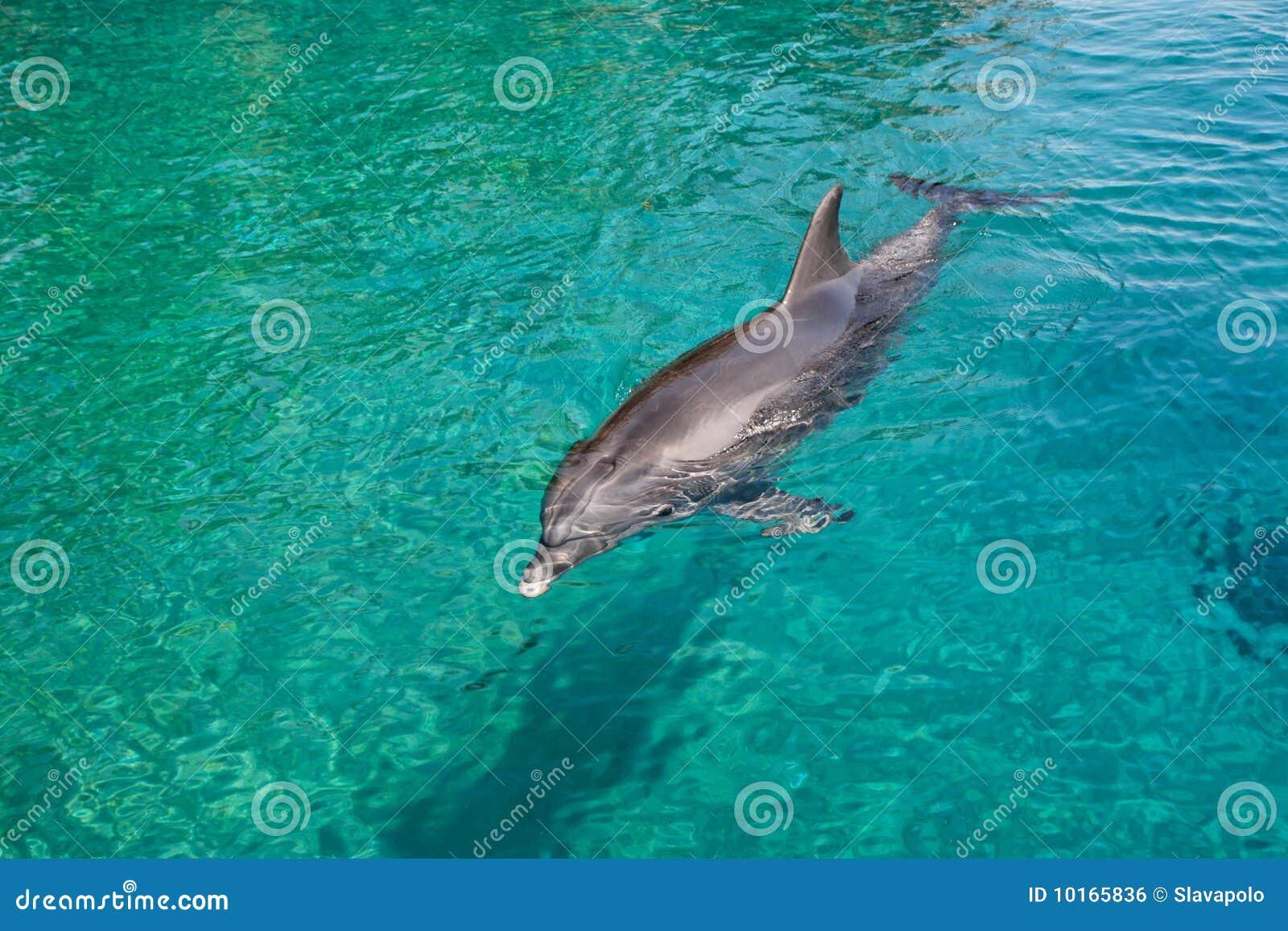 Clipart Sea Animals