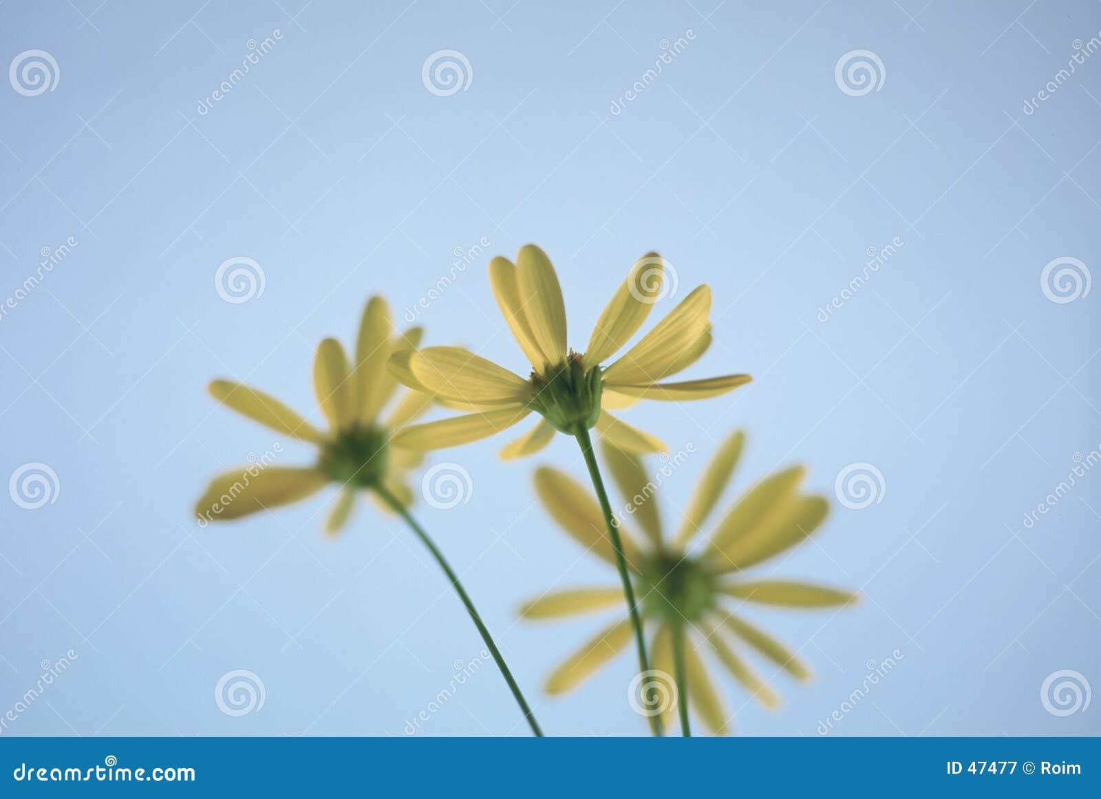 Bottom of daisies