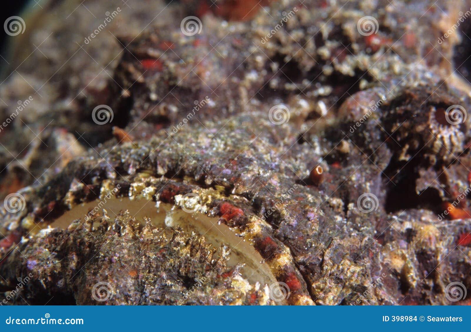 Bouche de Stonefish
