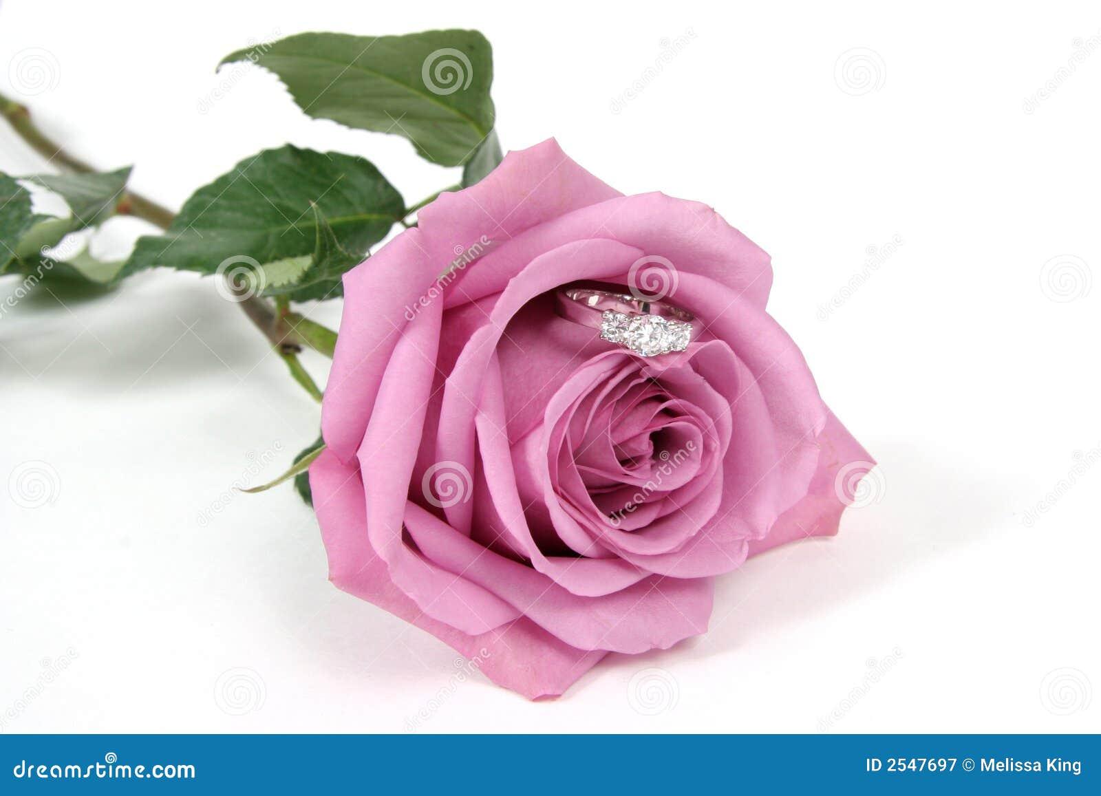 Boucle en Rose