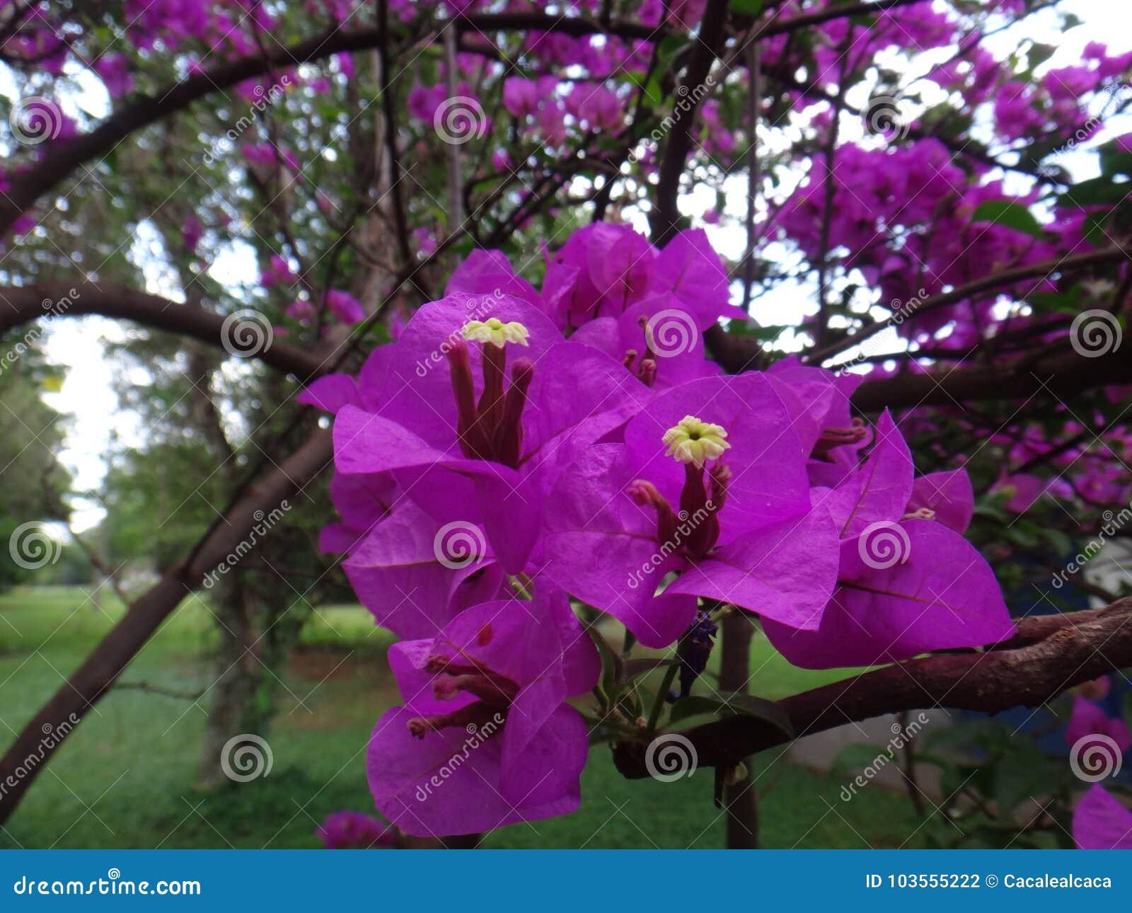 Paper Flower Stock Photo Image Of Decoration Colorado 103555222
