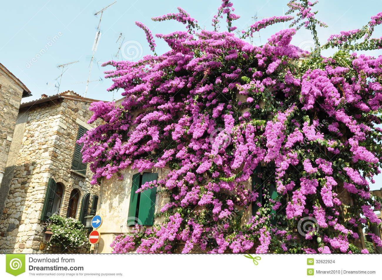 bougainvillea-flower-wall-hause-sirmione-lake-garda-32622924 Play Tree House Plans on tree houses in california, one tree treehouse plans, tree design, tree forts, tree houses for rent, tipi plans, tree houses for boys, swing set plans, yurt plans, playhouse plans, tree houses for dummies, deck plans, diy treehouse plans, tree houses for adults, tree houses for teenagers, tree mansion, tree stand plans, log home plans, tree houses for girls,