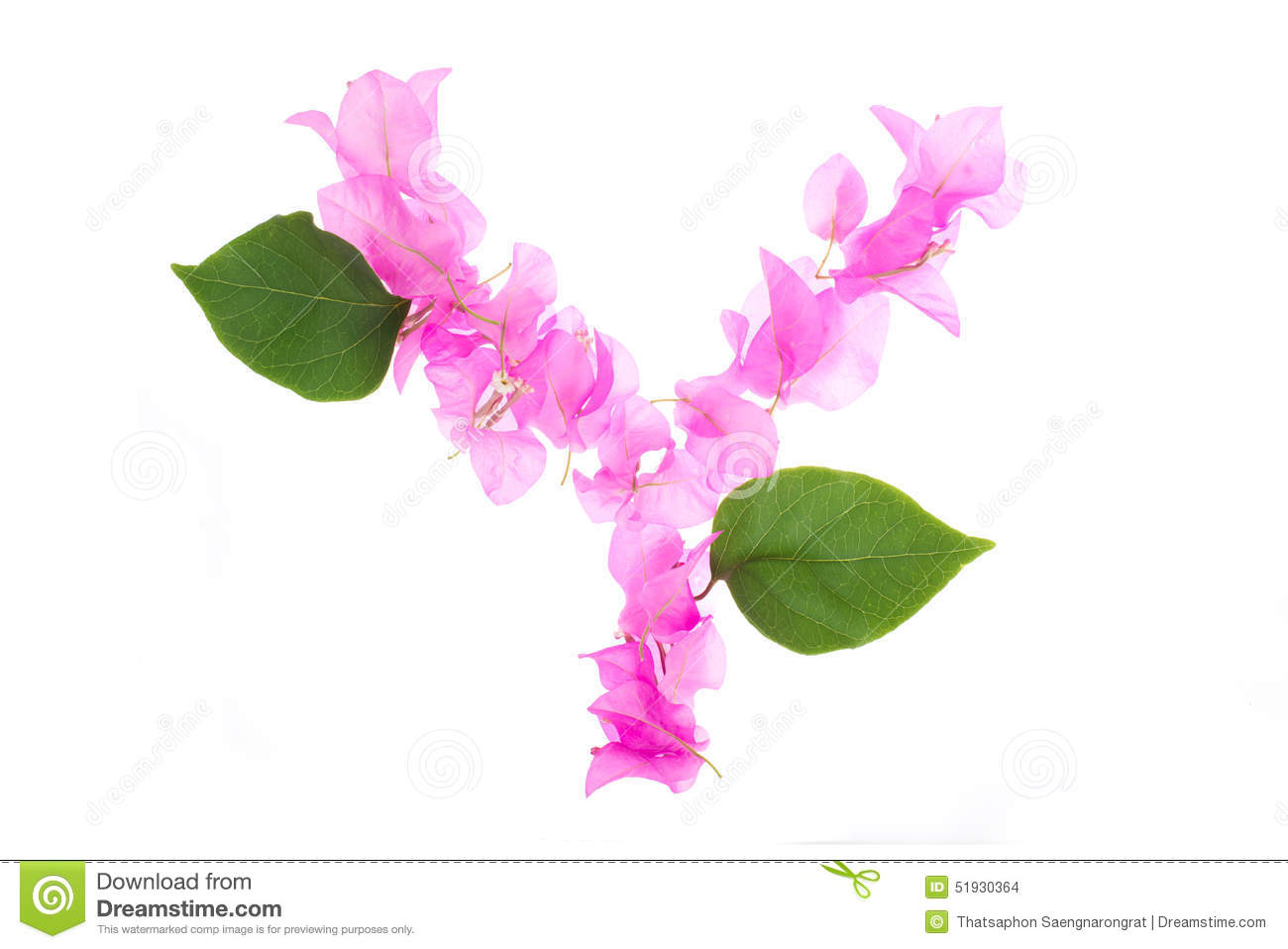 Bougainvillea flowers alphabet isolated on white background